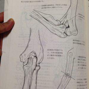 『新・動きの解剖学』144ページ