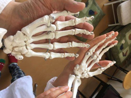 【手と手をあわせて〜】 Iさんといちろーたと、骨格模型・太郎くんの手